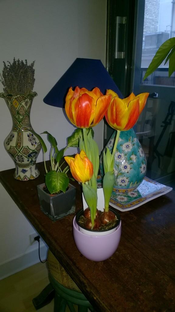 Fleur-Tulipe_20160223