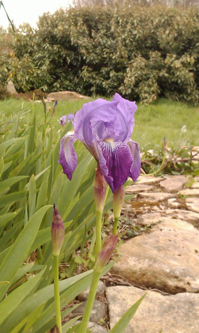 2014 - Iris